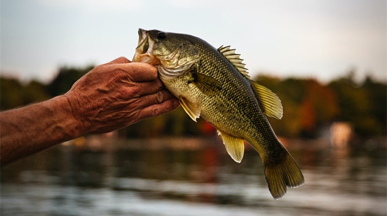 Tips on Fishing for Bass