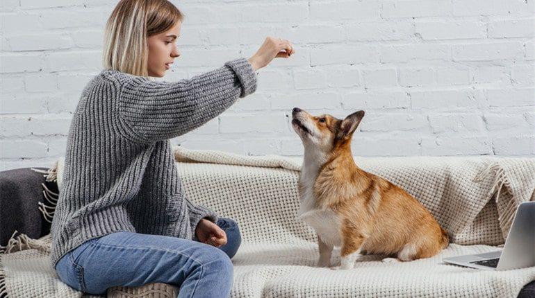 stop antisocial behavior from dog